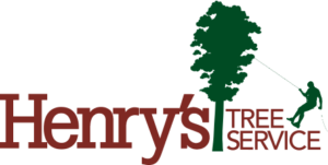 Henry's Tree Service – More than 20 years working in tree removal