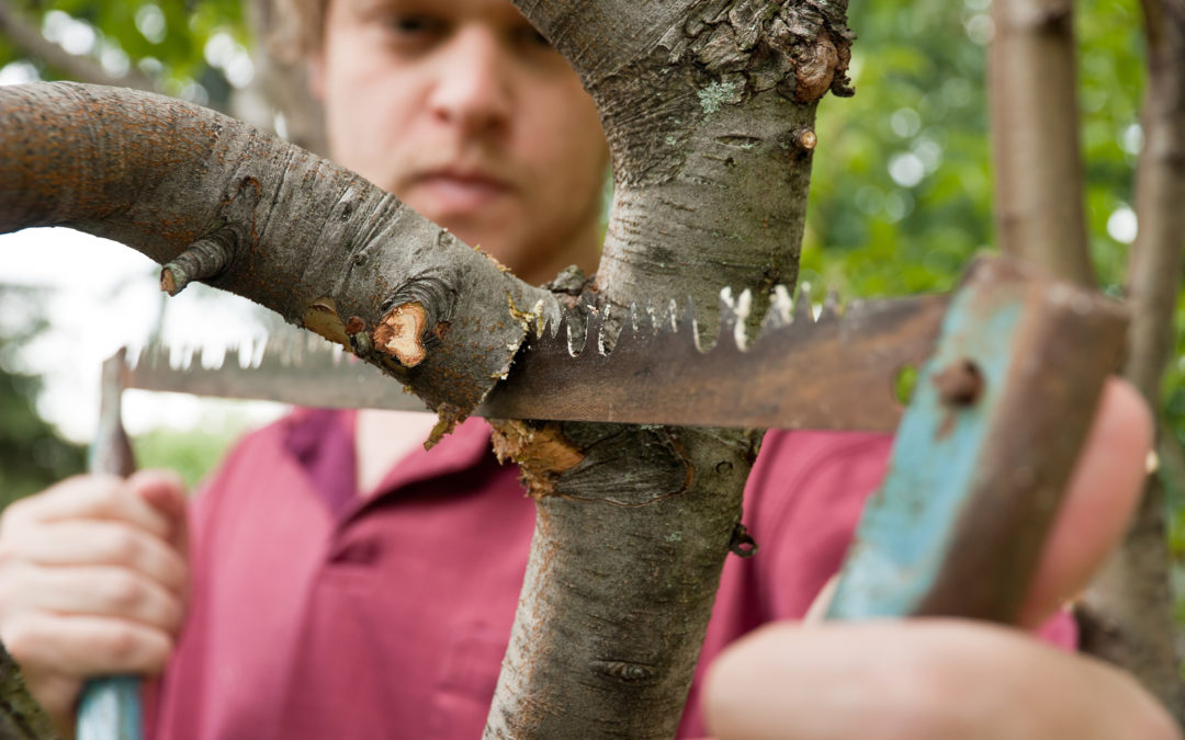 When To Trim a Tree's Branches