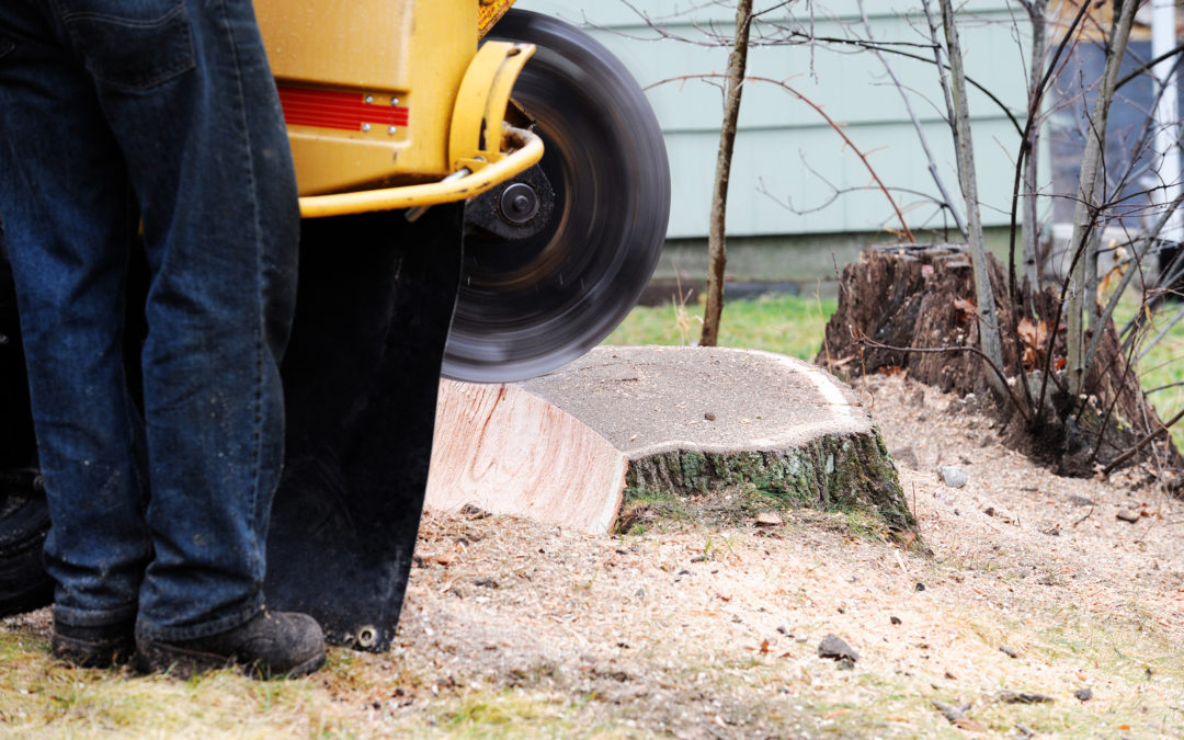 The Stump Grinding Process