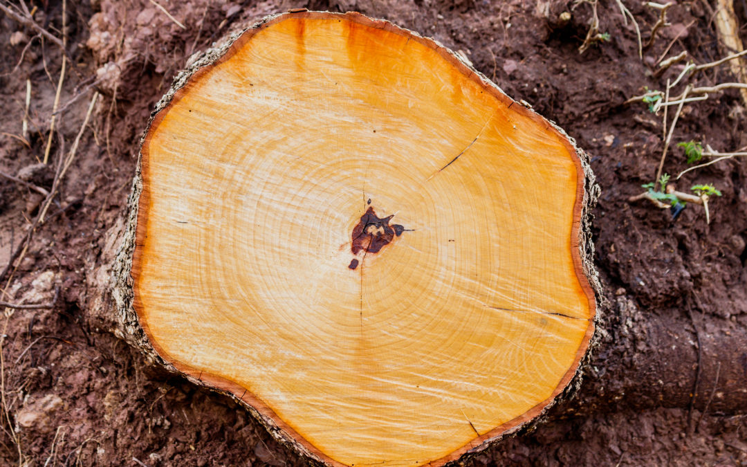 The Pros of Stump Grinding