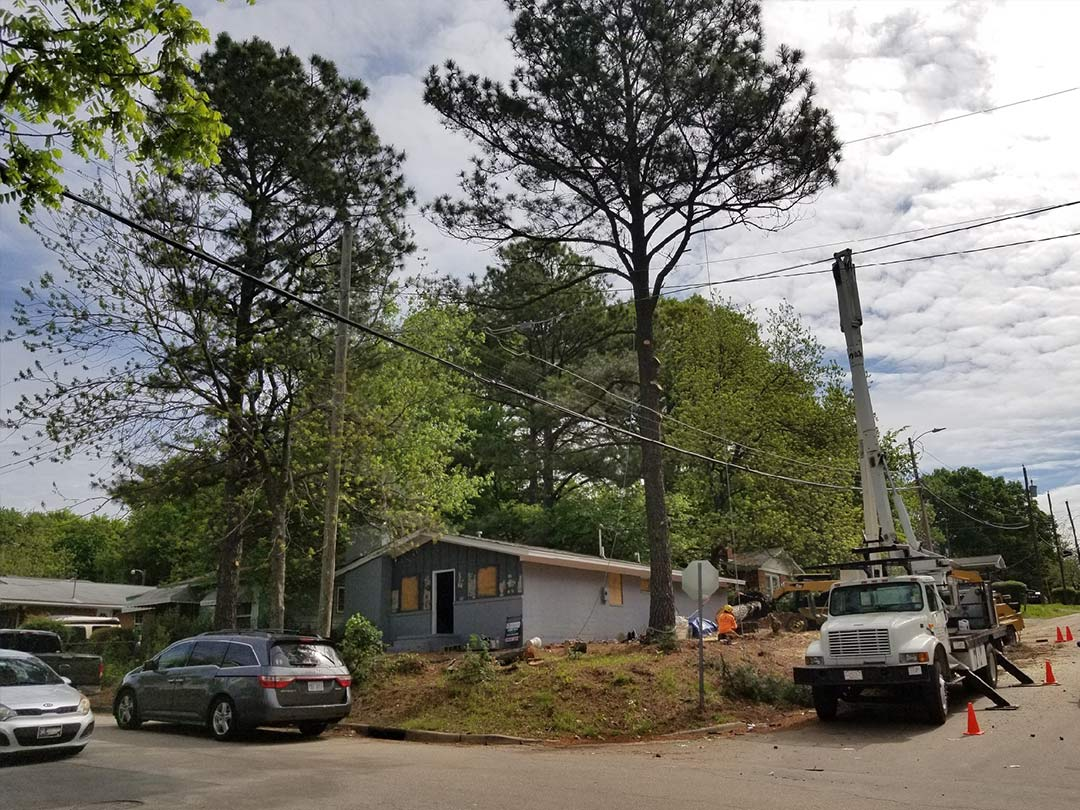 Henry's Tree Service Tree Removal Before