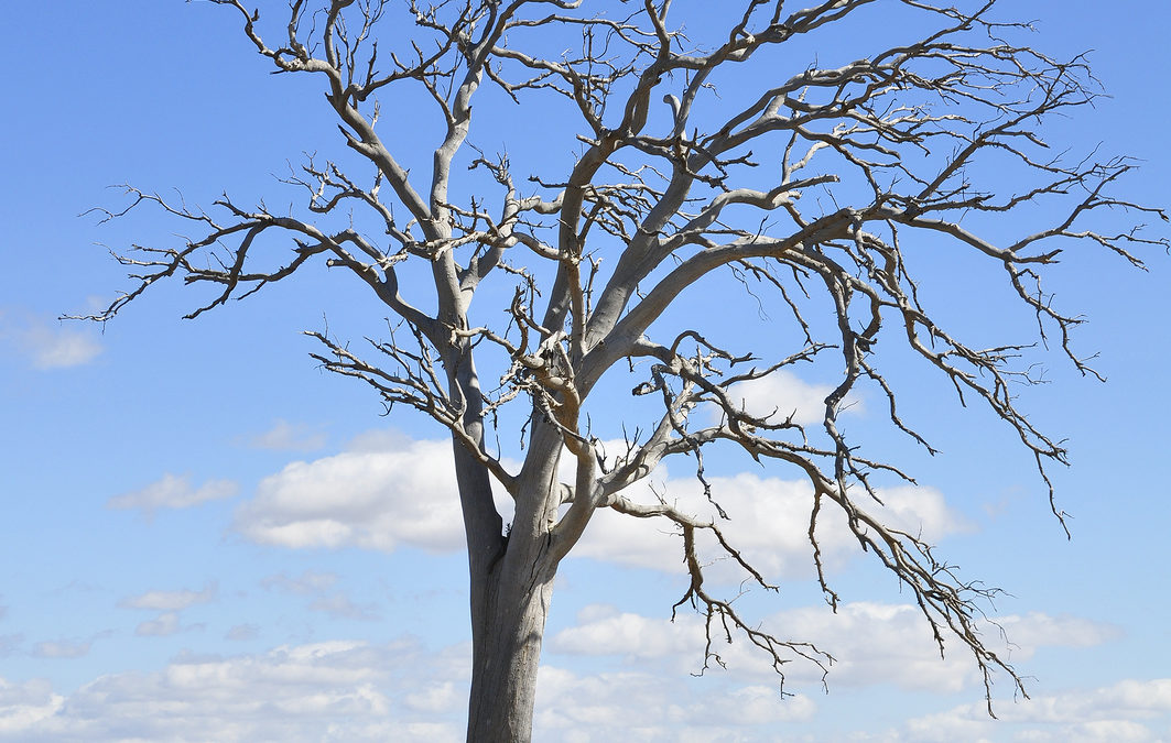 10 Signs of an Unhealthy Tree