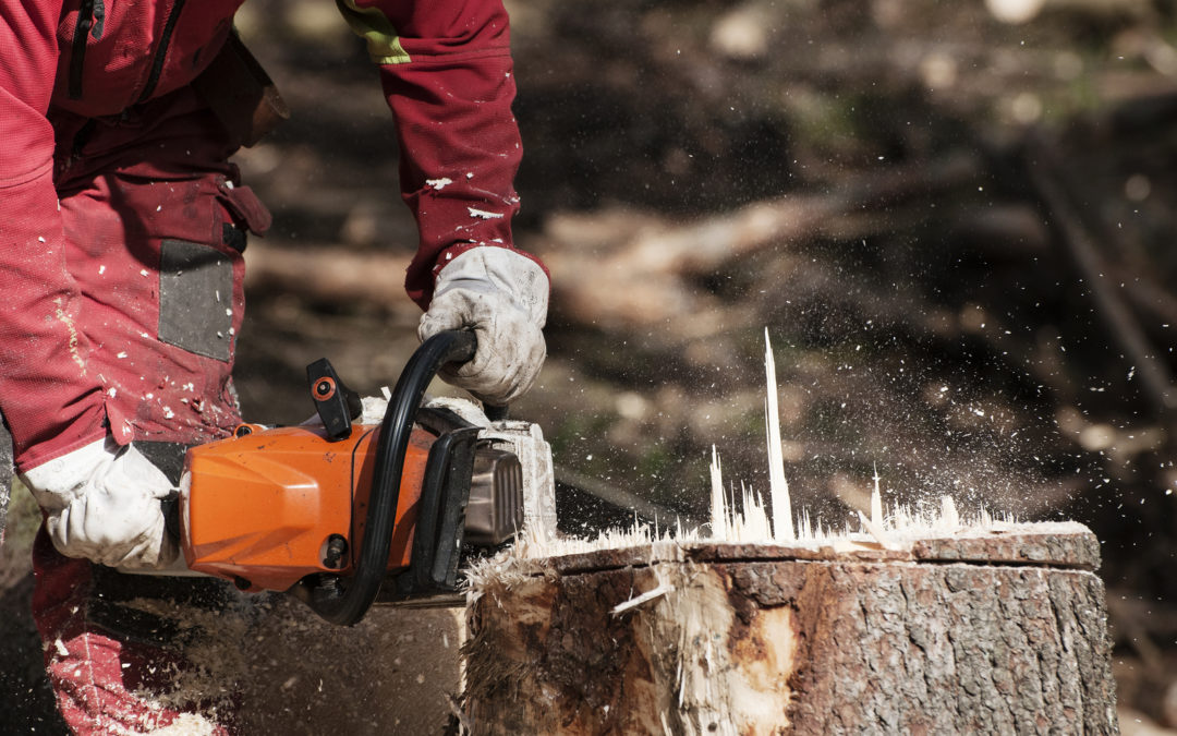 How to Remove a Stump the Right Way