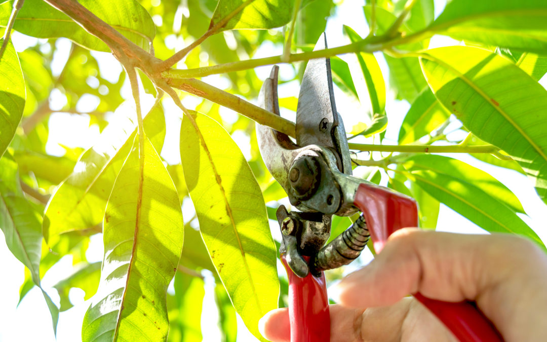 The Dangers of DIY Tree Care